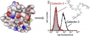 Bioorg Med Chem Lett 2011 19 3280